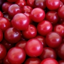 Picture of Plum Pernel MB