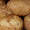 Picture of Potato Nadine