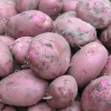 Picture of Potato Red Rascal
