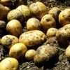 Picture of Potato Rua