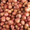 Picture of Shallots Bulb