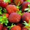Picture of Strawberry Camarosa